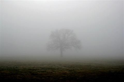 Wanneer de mist optrekt